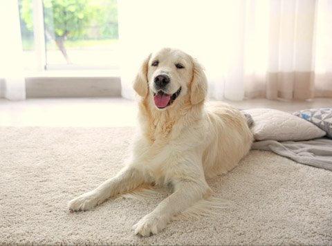 evde köpek eğitimi vermek
