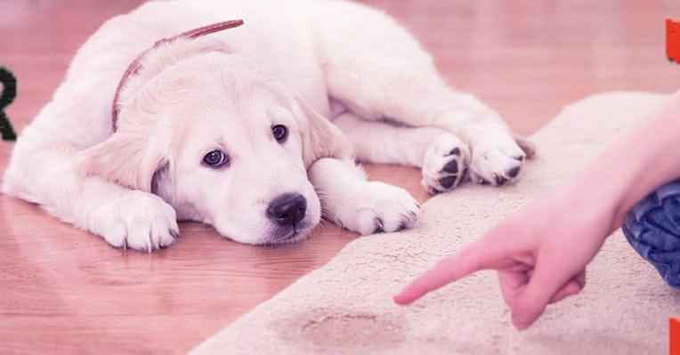 Köpekler Neden Mama Yemez?