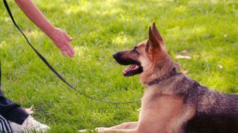 istanbul köpek eğitimi merkezi