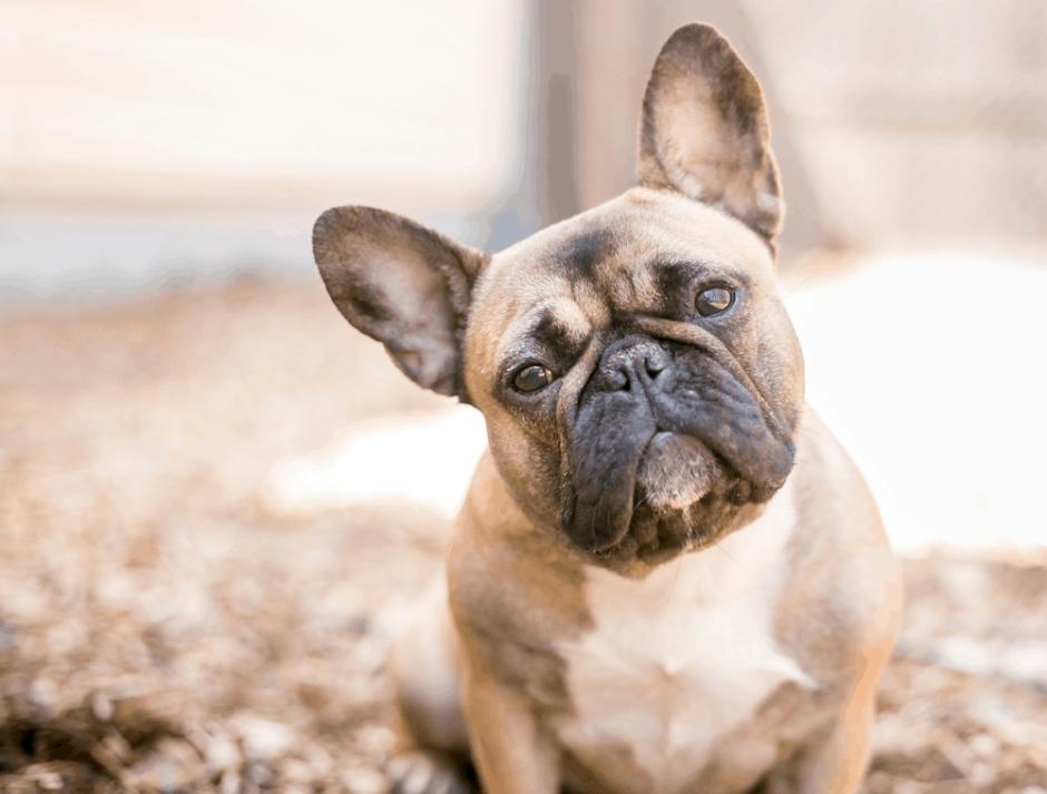 Bağcılar Köpek Eğitim Merkezi ve Köpek Oteli