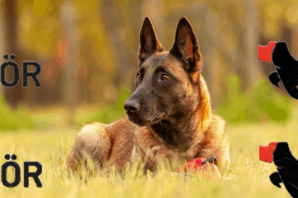 Bahçelievler Köpek Eğitim Merkezi ve Köpek Oteli