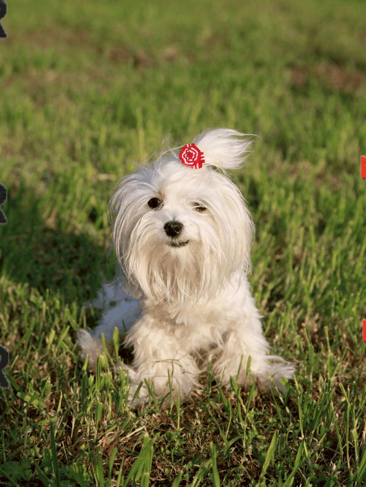 Beylikdüzü Köpek Eğitim Merkezi ve Köpek Oteli