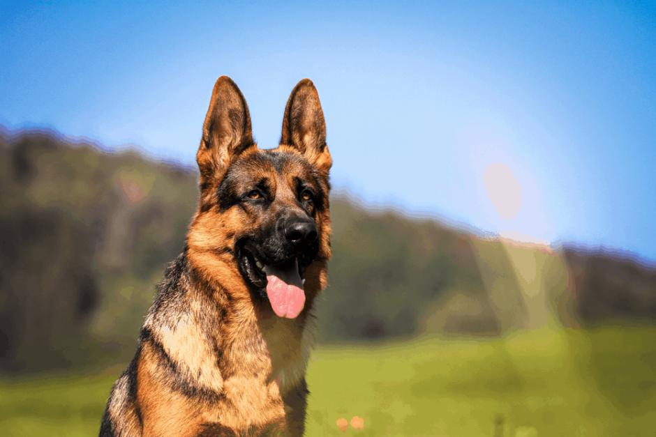 Esenyurt Köpek Eğitim Merkezi ve Köpek Oteli