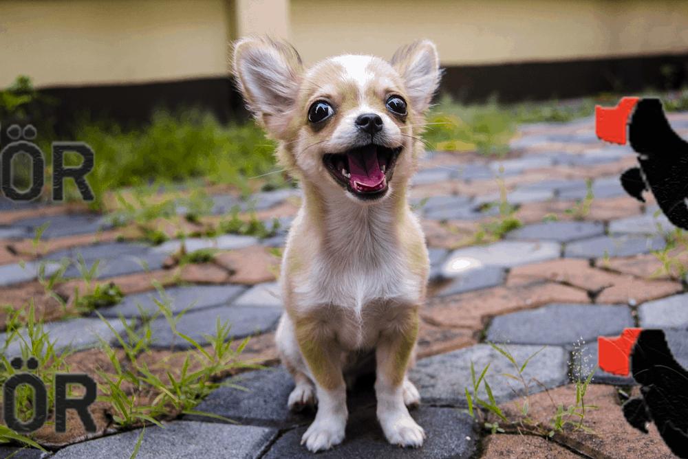 Şişli Köpek Eğitim Merkezi Ve Köpek Oteli
