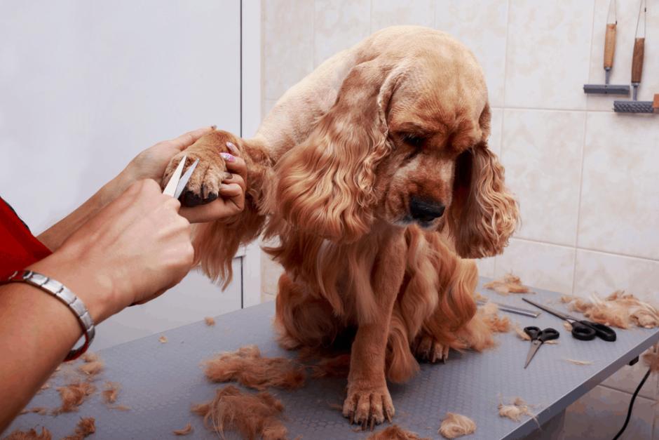 Esenler Köpek Eğitim Merkezi ve Köpek Oteli