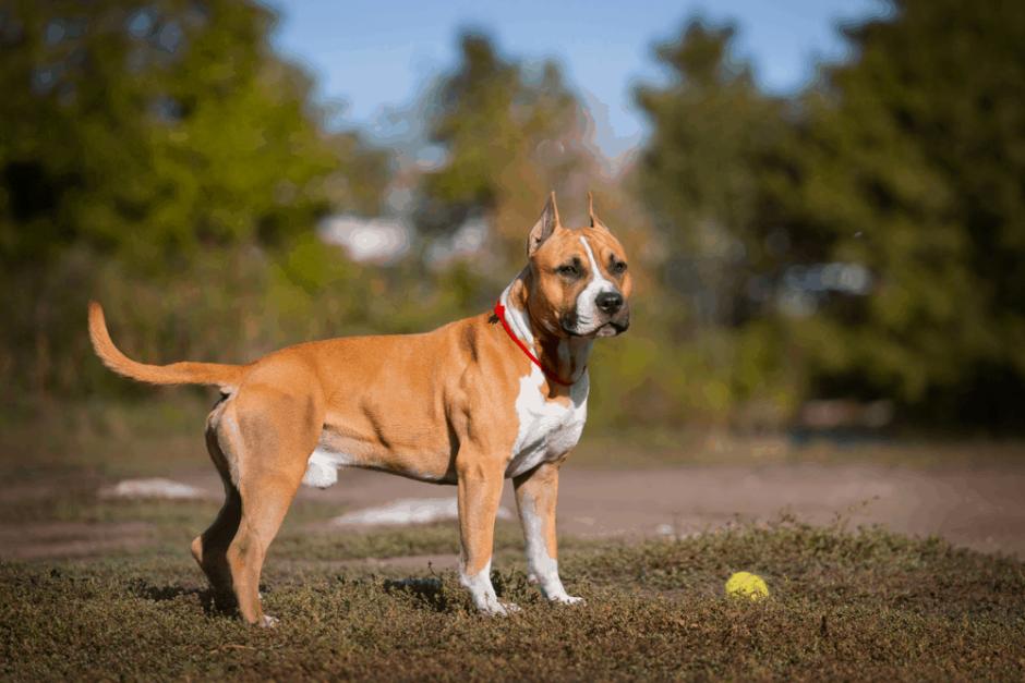 Silivri Köpek Eğitim Merkezi Ve Köpek Oteli