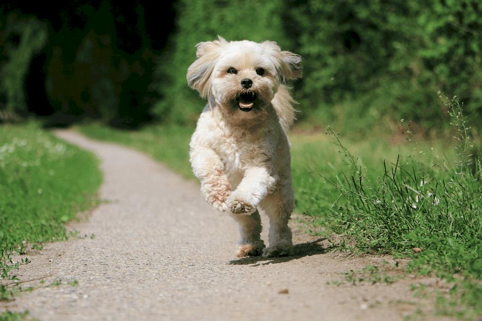 Köpek Eğitimin Püf Noktaları