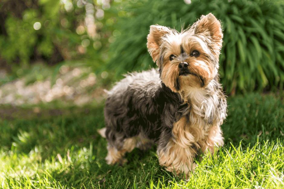 Köpek Eğitiminin Köpek Sahiplerine Artıları