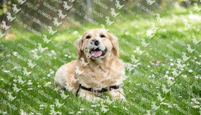 Beylikdüzü Köpek Eğitim Merkezi; Davranış bozukluğu