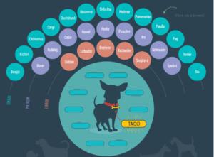 Köpek İsimleri