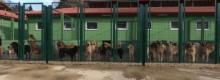 istanbul'daki köpek barınakları