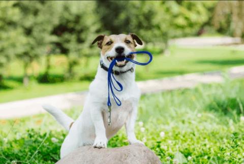 evde köpek eğitimi