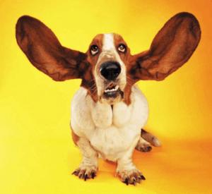 köpek kulakları