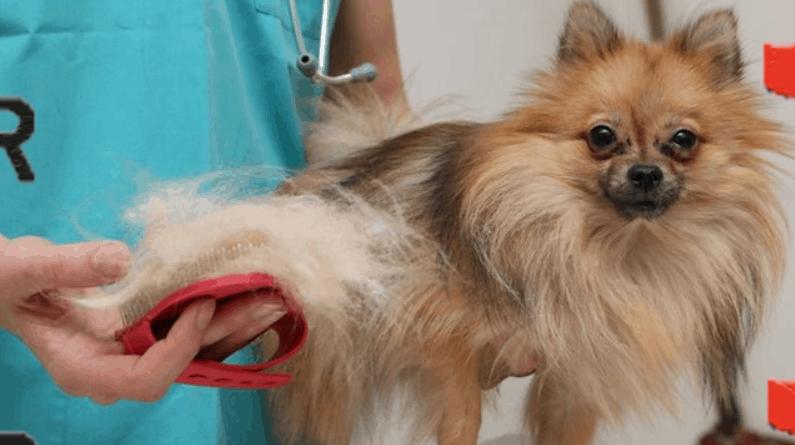 köpeklerde tüy dökülmesi
