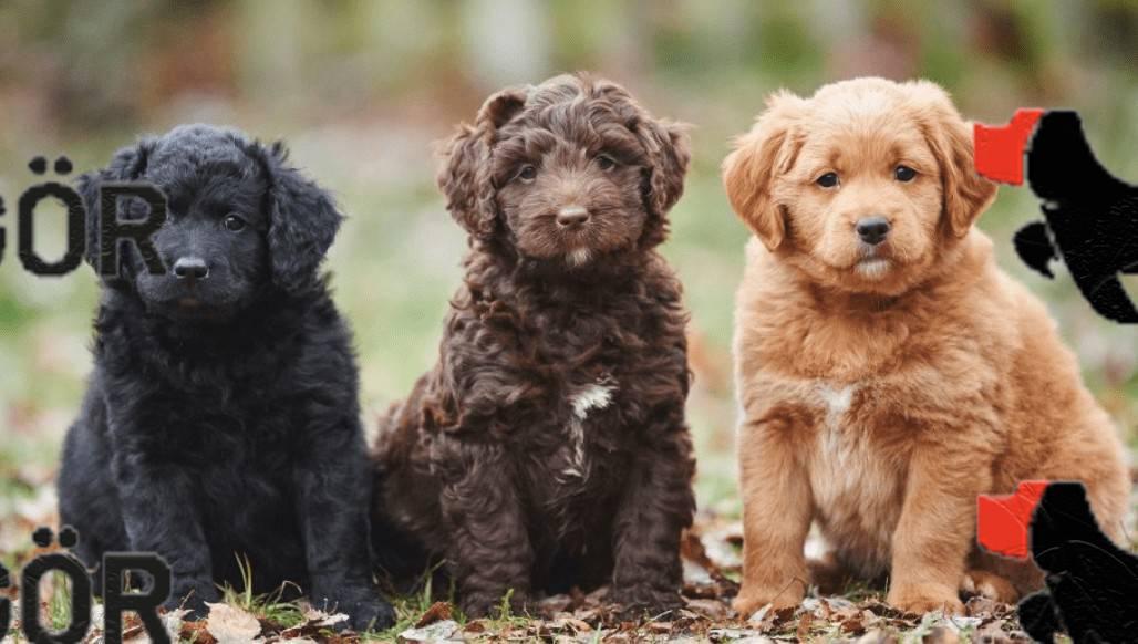 Yavru Köpek İsimleri