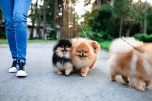 yavru köpek sosyalleştirme