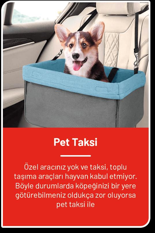 Pet Taksi