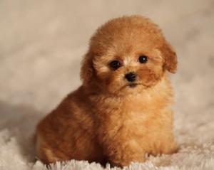 Yavru Köpek Alırken Sorulması Ve Dikkat Edilmesi Gerekenler