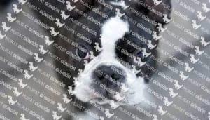 Boston Terrier Eğitimi